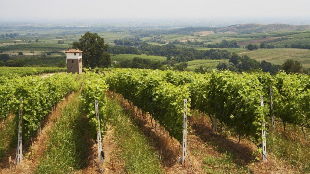 kir-yianni-estate-vitt-vin-assyrtiko-vinkoplistan-vinbanken