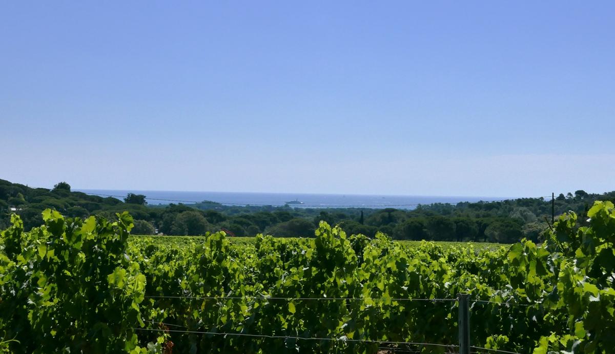 chateau-minuty-vingard-provence-rosevin-vinbanken