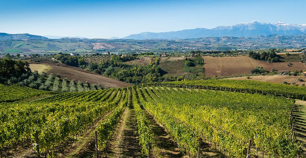 Umani-Ronchi-ekologiska-viner-fran-marche-och-abruzzo