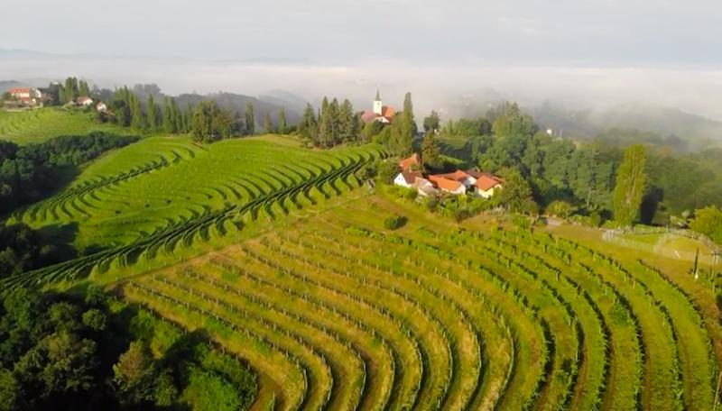 Vitt vin från Slovenien och fler | Vinköplistan 32