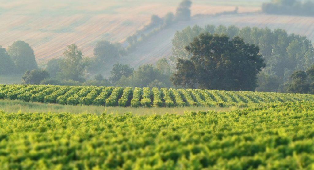 forandringens-tid-i-muscadet-vinbanken