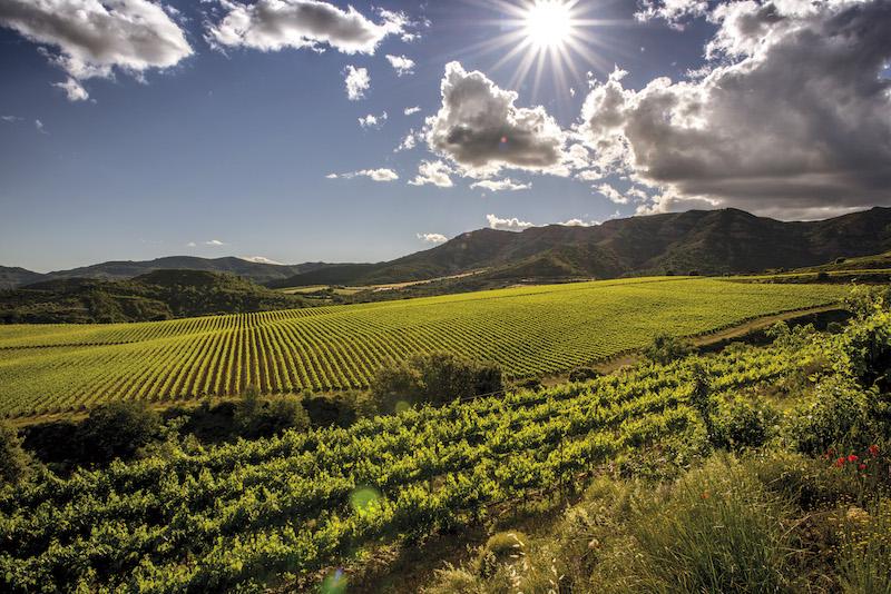 Vinbanken-TORRES_Sant Miquel_Tremp_Jordi Elias_300ppp