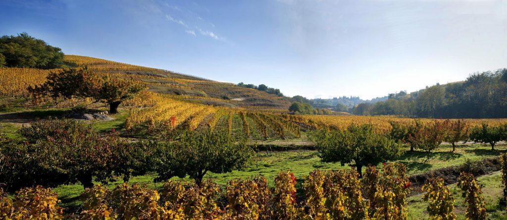 Crozes-Hermitage-basta-kopen-systembolaget-vinbanken