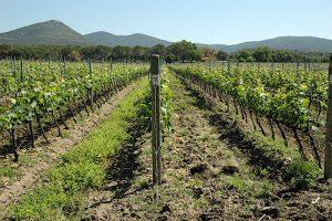 camarcanda-bolgheri-vinbanken
