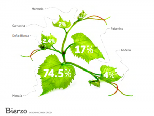 druva-bierzo-galicien-spanien-vinbanken