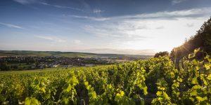 chablis-vinbanken