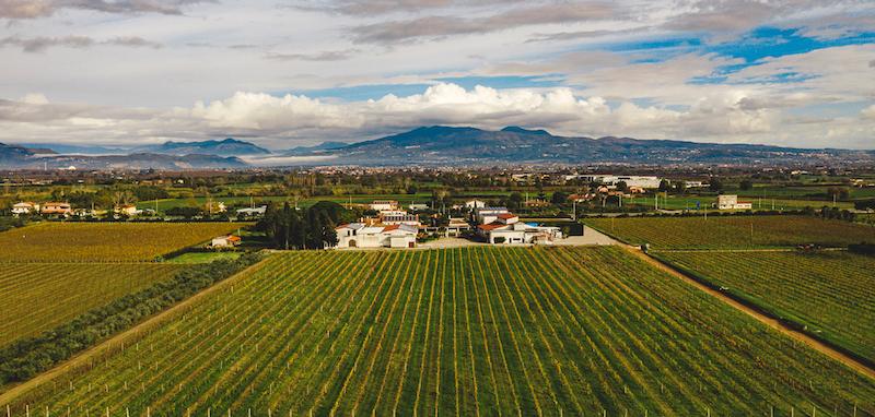 Vintips till midsommar   vinkoplistan 25-VINBANKEN-Villa-Matilde-Avallone