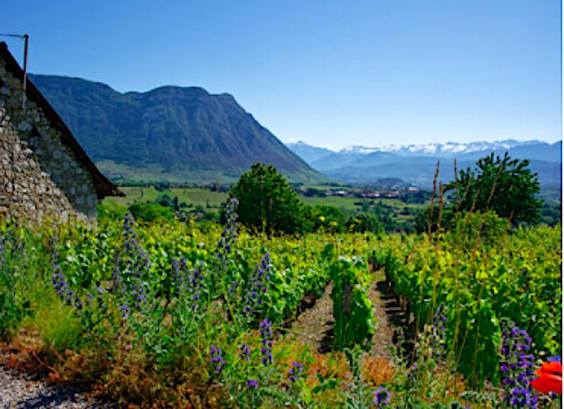 Vin-fran-Savoie-med-sparsmakade-vin-parlor-vinbanken