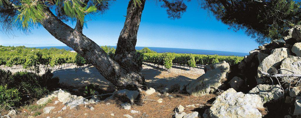 IGP-Pays-d'Oc-Languedoc-Roussillon-for-mangfald-och-prisvarde-vinbanken