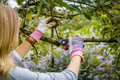 Lady pruning tree at West Dean Gardens. Image credit Christopher Ison