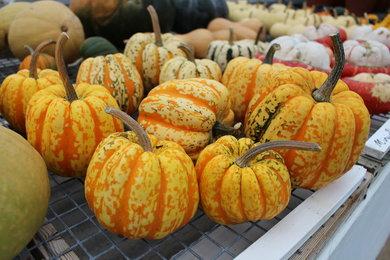 Gourds in autumn at West Dean Gardens