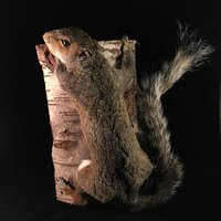 Tonja Grung taxidermy squirrel