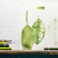 Ann Swan intro to botanical drawing