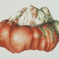 Mariella Baldwin Botanical painting – pumpkins and gourds