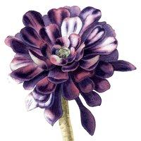 Sandrine Maugy botanical painting - succulents