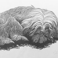 Chris Daunt wood engraving