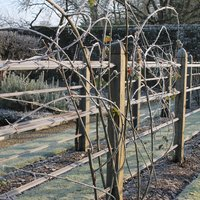 Benjamin Pope The winter garden – creating and maintaining winter interest