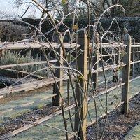Benjamin Pope The winter garden – creating and maintaining winter interest