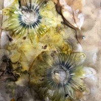 Nawal Gebreel Eco-printing with plants and flowers on paper and silk