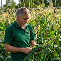 Max Crisfield Growing vegetables from scratch