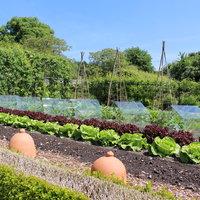Tom Brown Growing food under glass – advanced kitchen gardening