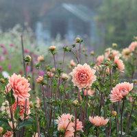Rachel Siegfried Grow your own cut flowers for pleasure or profit