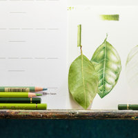 Ann Swan Introduction to botanical drawing