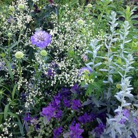 Henry Macaulay Working with colour in your garden