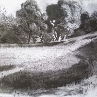 Rosie MacCurrach Inspirational drawing in the gardens - pattern and place