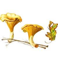 Sandrine Maugy Botanical painting – autumn colours