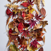Anne Tomlin Millinery silk flower making autumn leaves and berries