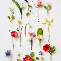 Anne Tomlin Millinery silk flowers – making spring flowers
