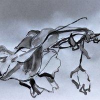Caroline Wendling Experimental landscape drawing