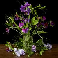 Kevin Dutton Botanical photography – plant portraits