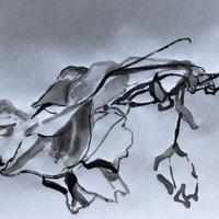 Caroline Wendling Sensory landscape drawing