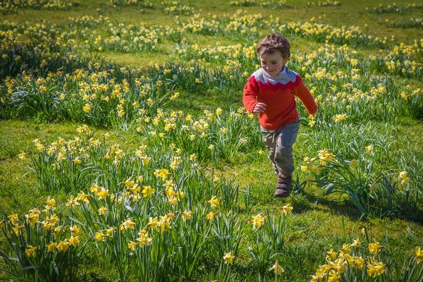 Amongst the daffodils at West Dean Gardens