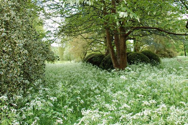 Wildflower Meadow at West Dean