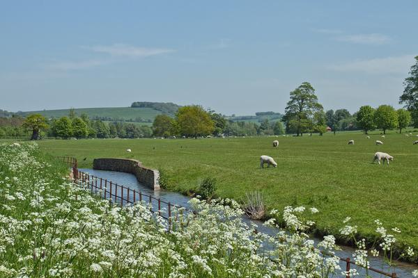 Cow parsley by the River Lavant at West Dean Gardens
