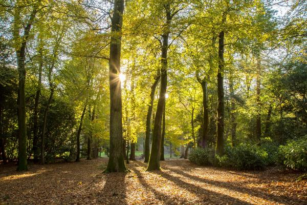 St Roche's Arboretum in autumn