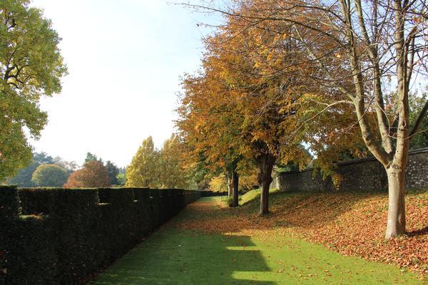 Castellated hedging at West Dean Gardens