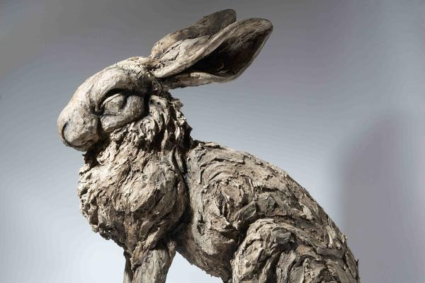 Felicity Lloyd-Coombes: Sitting hare