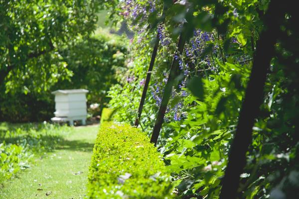 West Dean Gardens orchards