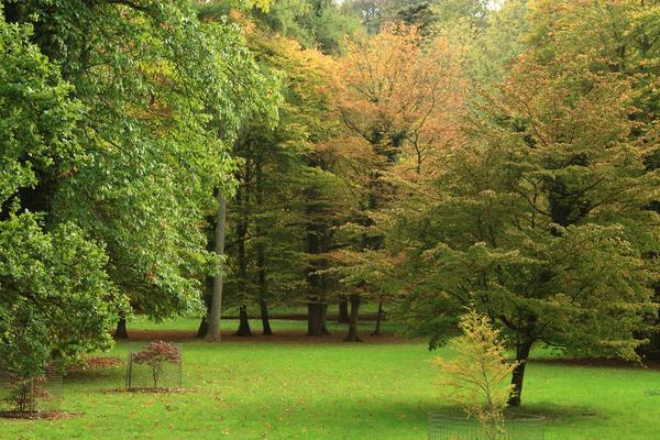 Autumn in St. Roche's Arboretum, West Dean Gardens