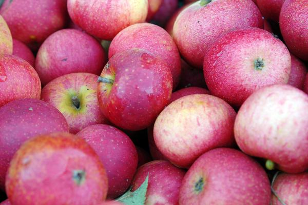 Apples from West Dean Gardens orchards