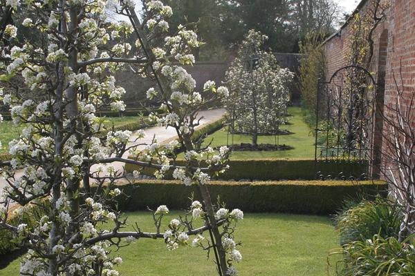 Fruit trees at West Dean Gardens