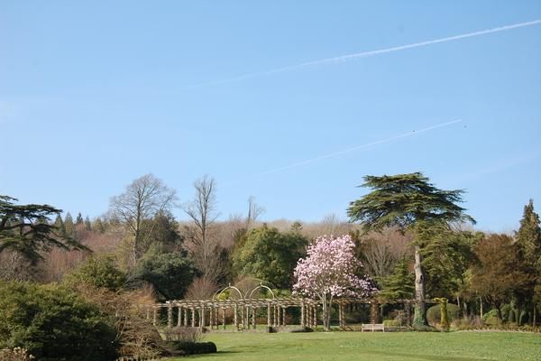 Magnolia madness at West Dean