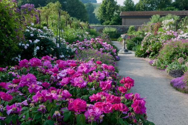 Summer Borders at West Dean Gardens West Sussex