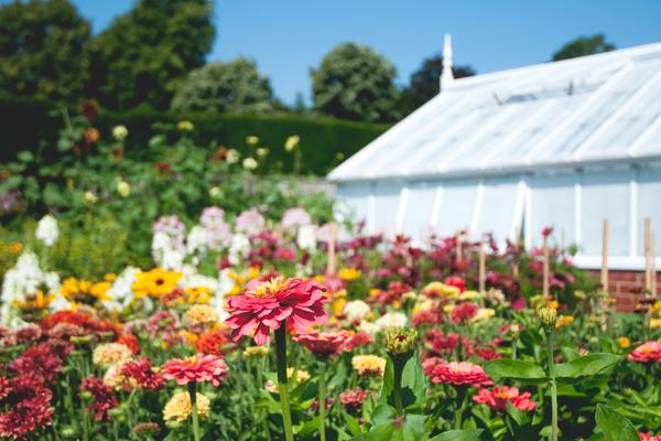Flowers in front of the glasshouses at West Dean Gardens