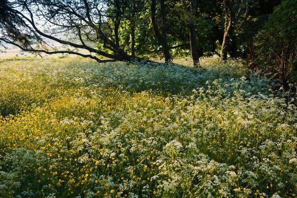 Wild Flowers at West Dean Gardens