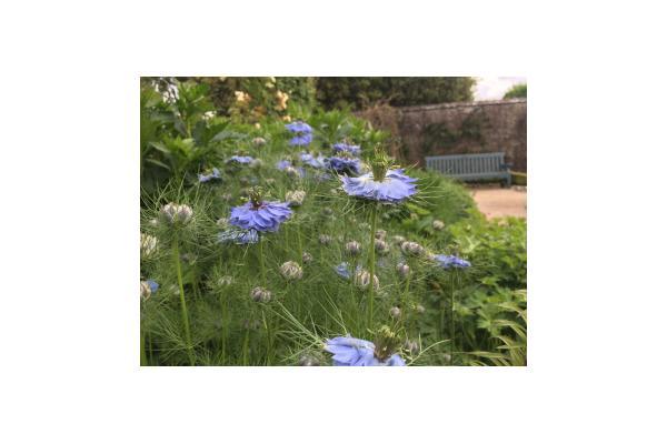 Blue borders at West Dean Gardens